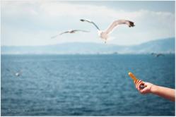 pescarusi_keramoti_dragosdone_015